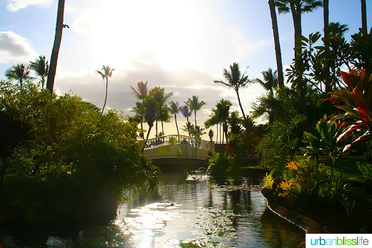 beautiful maui resort: fairmont kea lani