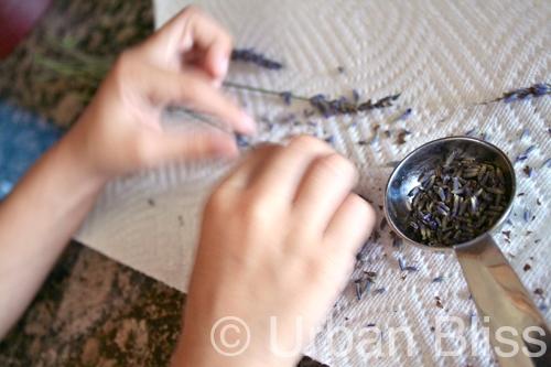 Lavender Shortbread Cookies - kids baking