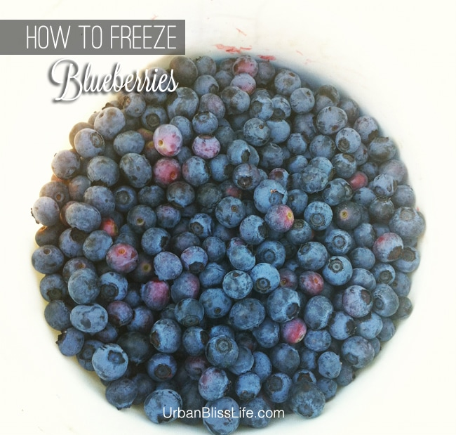 How to Freeze Blueberries on UrbanBlissLife.com