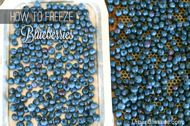 How to Freeze Blueberries 04
