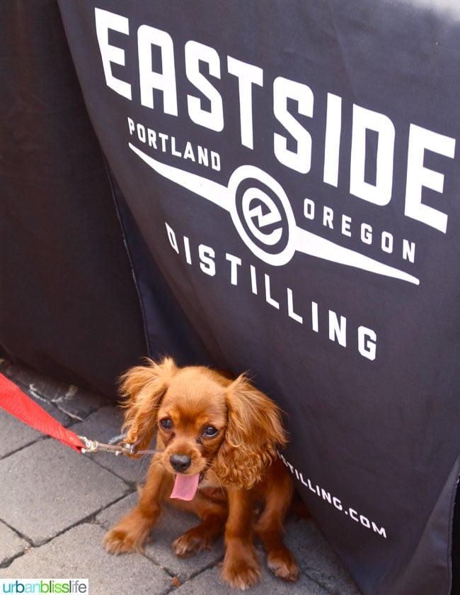 Oregon Berry Fest Eastside Distilling Dog