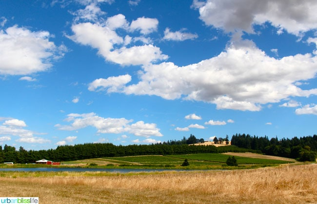 Oregon Berry Fest Unger Farms Scenic