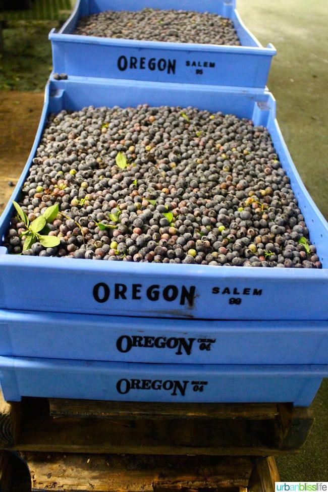Oregon Fruit Products tour