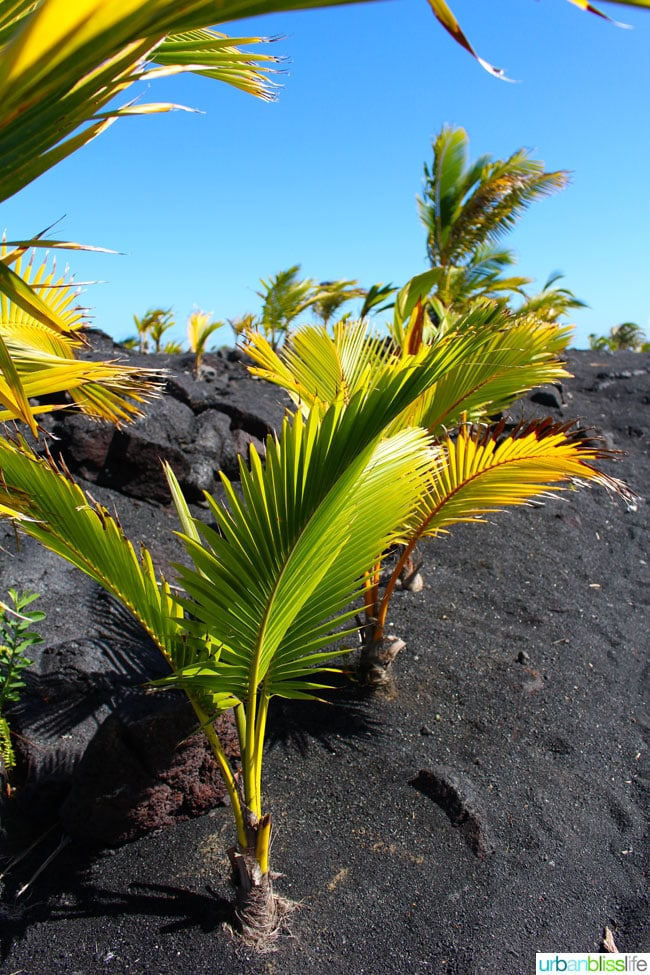 HawaiiVolcanicBeach2