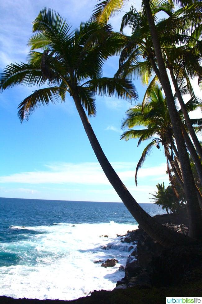 Hawaiipalmtrees2