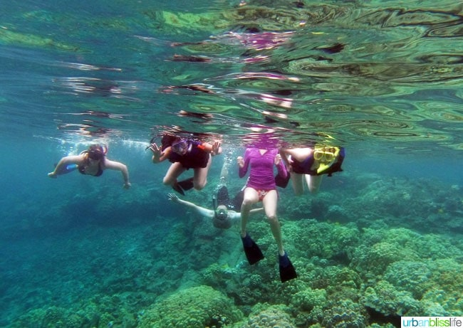 Hawaii Island Snorkeling   UrbanBlissLife.com
