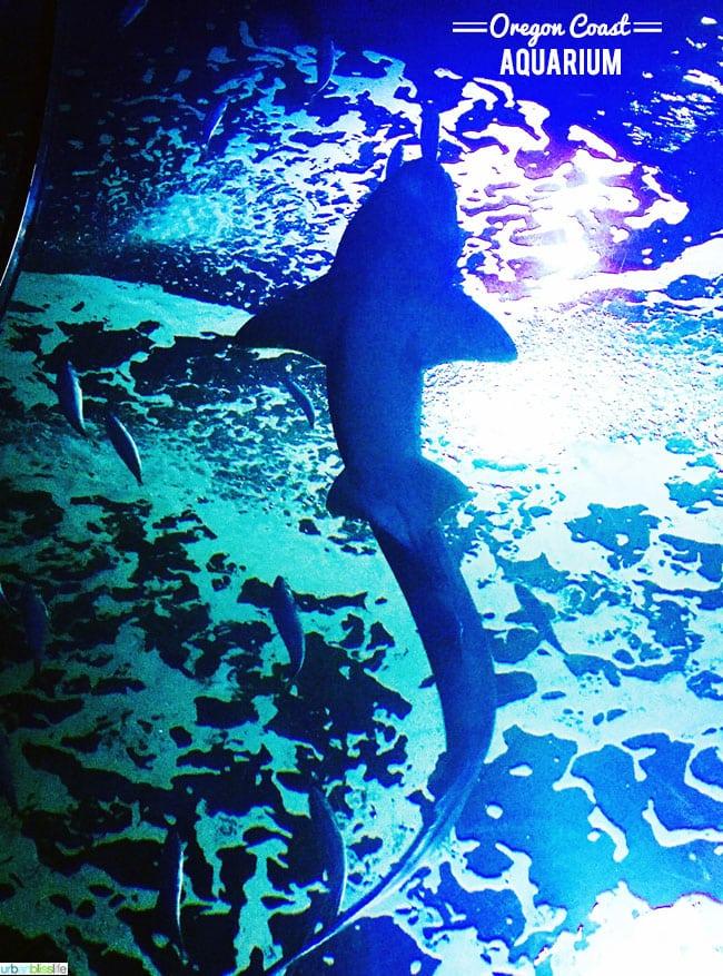 The Oregon Coast Aquarium