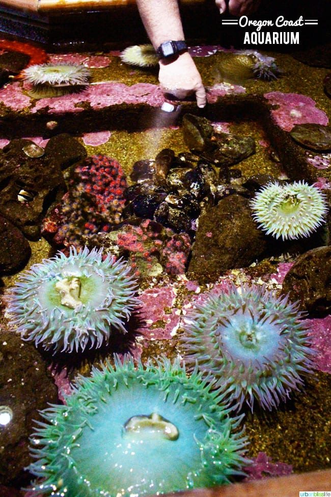Oregon Coast Aquarium, Newport Oregon