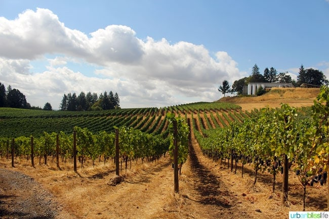 Oregon Wine Country: Durant Vineyards Celebrates Collaboration Over Competition