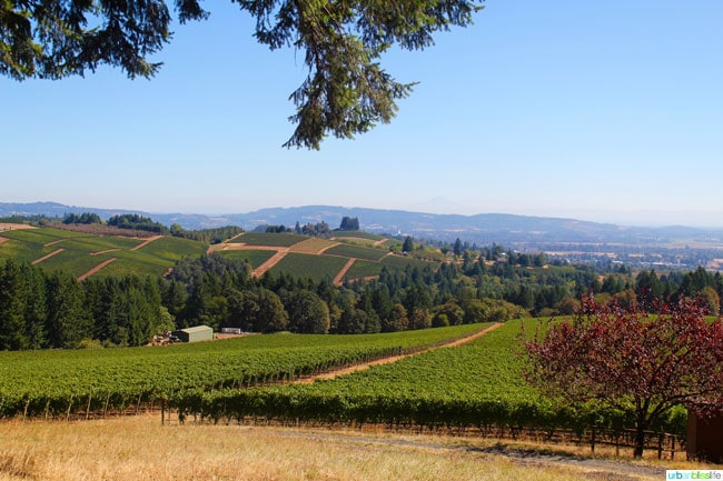 View from Knudsen Vineyard on UrbanBlissLife.com