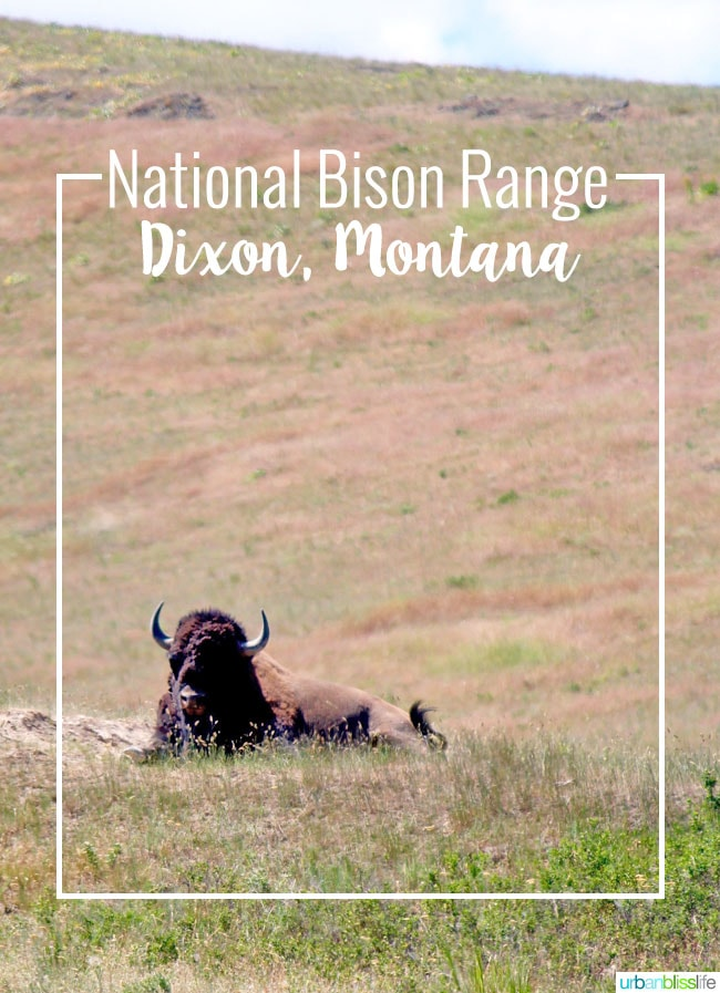 National Bison Range in Montana on UrbanBlissLife.com