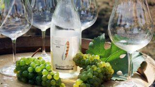 Raptor Ridge Winery