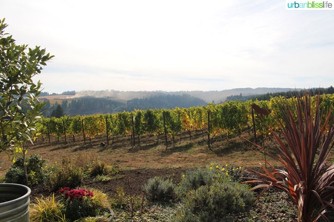 Raptor Ridge Winery - Oregon Wine Country - UrbanBlissLife.com