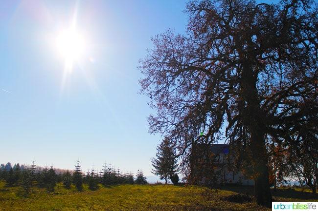 Oregon Tree Farm ©UrbanBliss