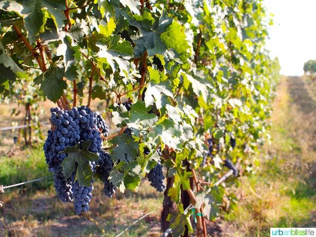 Walla Walla Wine Country: Va Piano, on UrbanBlissLife.com