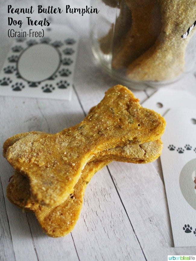 Dec 16, · Homemade Dog Treats Recipe – Peanut Butter Dog Treats. Your dog deserves Homemade Dog Treats! And they're going to absolutely love these fun Peanut Butter Dog Treats. Homemade Dog Treats are so simple and easy! I've been doing the blog for over a year now and Scout has been by my side for every recipe/5(50).