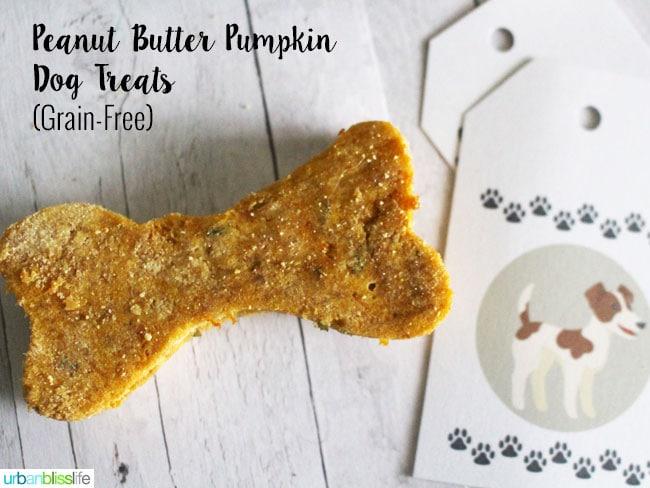 Grain Free Pumpkin Dog Treat Recipes