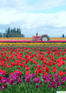 2016 Tulip Festival in Woodburn, Oregon on UrbanBlissLife.com