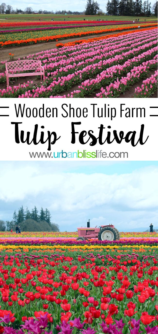 2016 Oreogn Tulip Festival in Woodburn on UrbanBlissLife.com