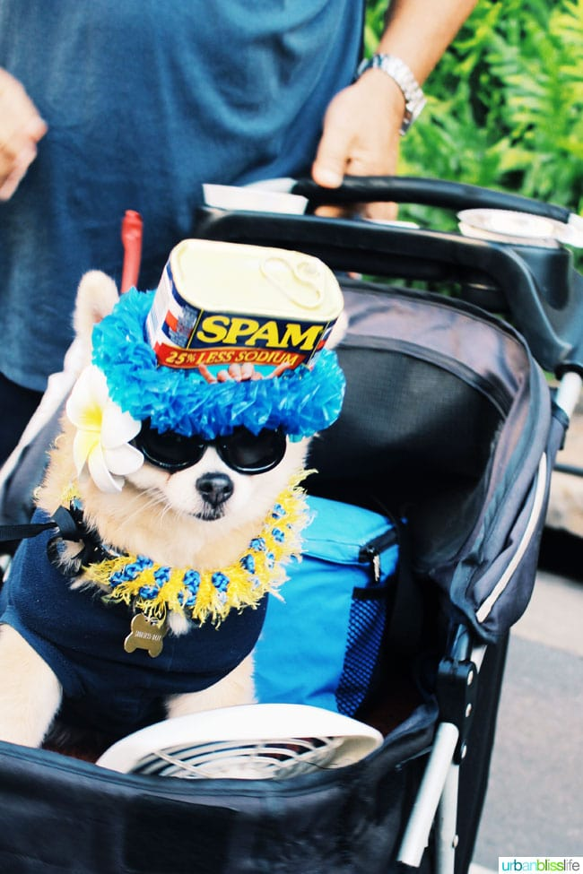 dog wearing spam outfit