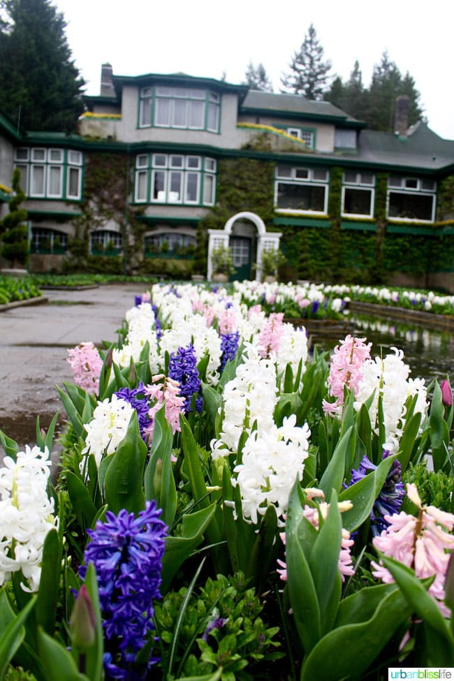 flowers at Butchart Gardens