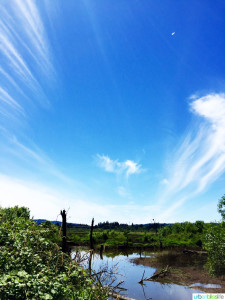 Travel to Tualatin River National Wildlife Refuge on UrbanBlissLife.com