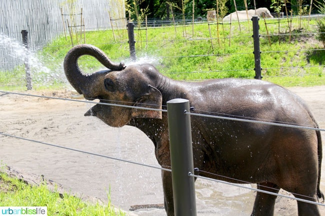 The Oregon Zoo offers fun for kids of all ages! Travel tips on UrbanBlissLife.com