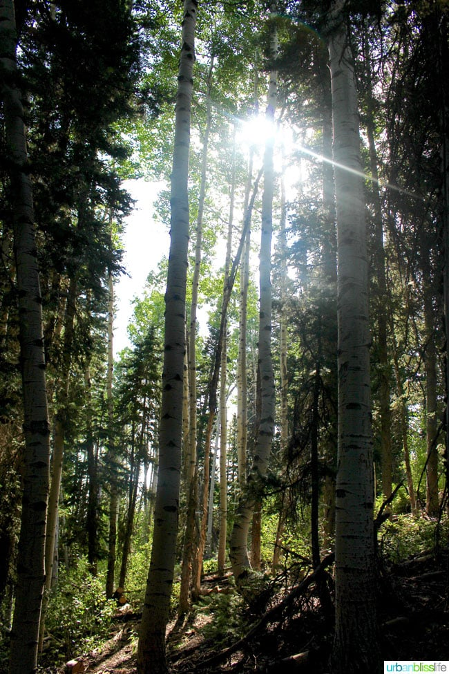 Best Park City, Utah hikes - forest on Silver Lake Trail