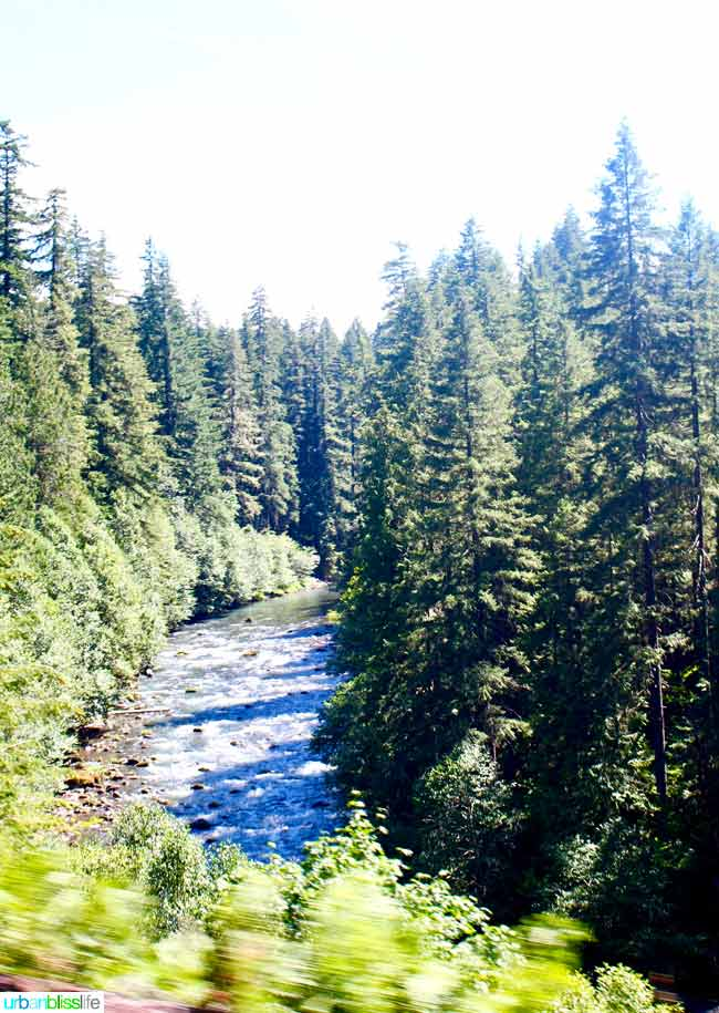 central oregon forest and river