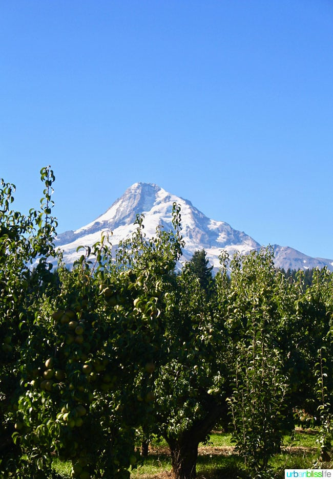 Kiyokawa Family Orchards in Hood River, Oregon. UrbanBlissLife.com