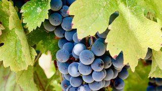 Applegate Valley Wine Tasting: Troon Vineyard (Grants Pass, Oregon)