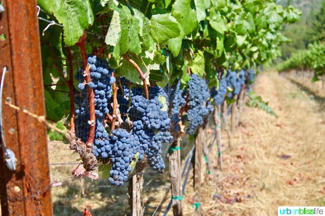 Applegate Valley Wine Tasting: Troon Vineyard, Grants Pass