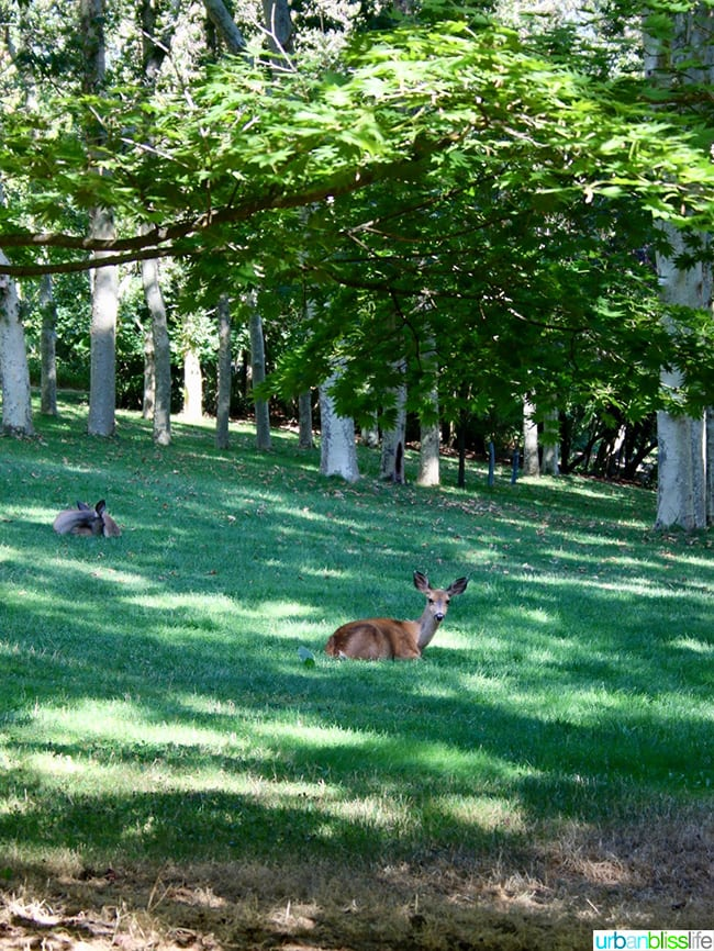 Ashland Oregon Travel Guide - deer at Lithia Park