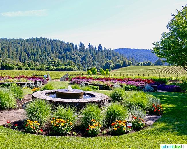 goldeneye vineyard