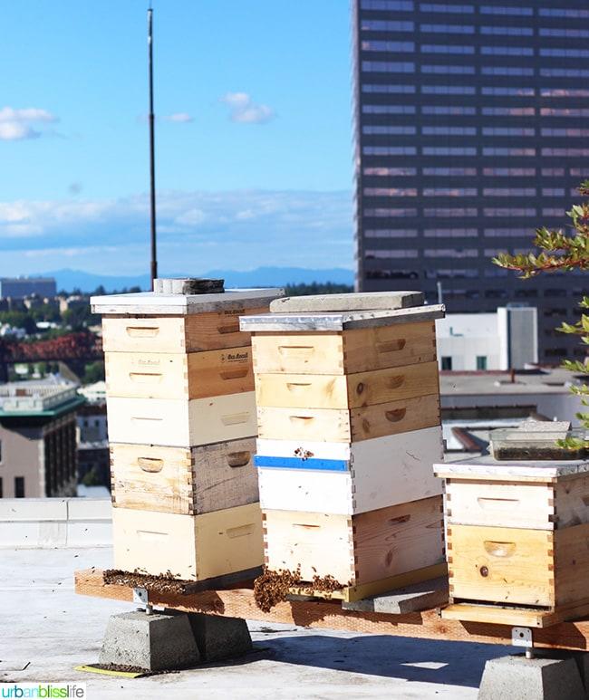 beehive rooftop