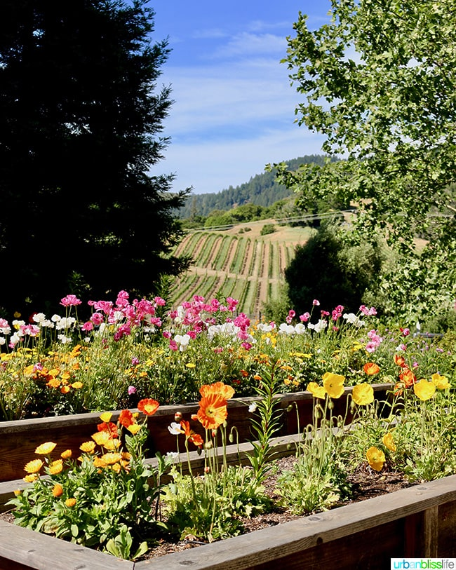 Alexander Valley Wineries: Goldeneye