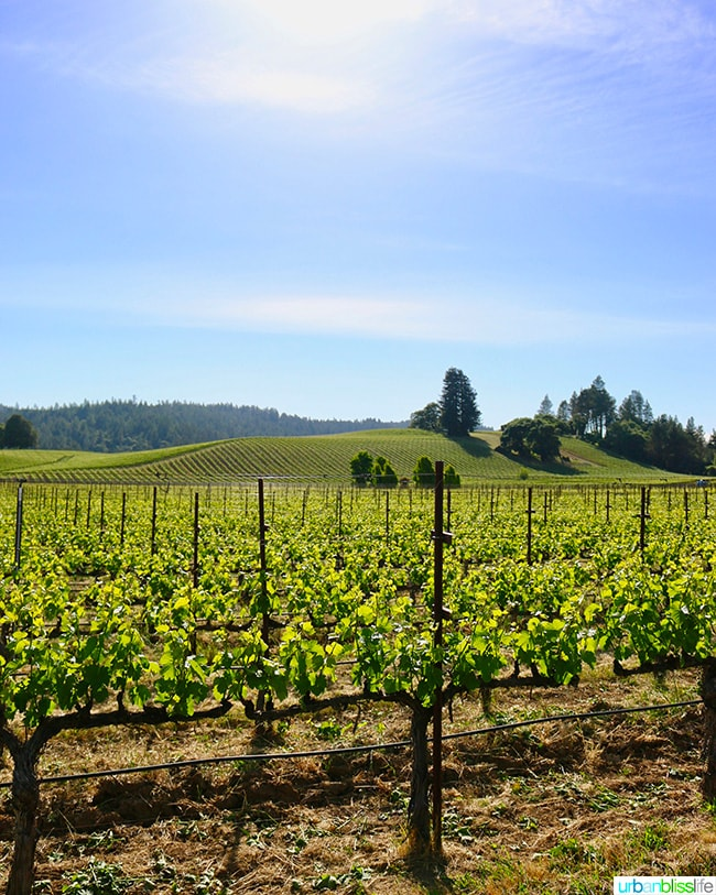 Top Anderson Valley Wineries on UrbanBlissLife.com