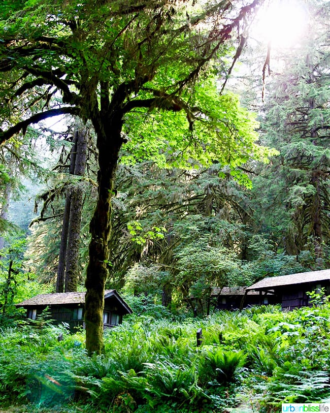 Cabin camping in Oregon: Silver Falls Lodge cabins in forest