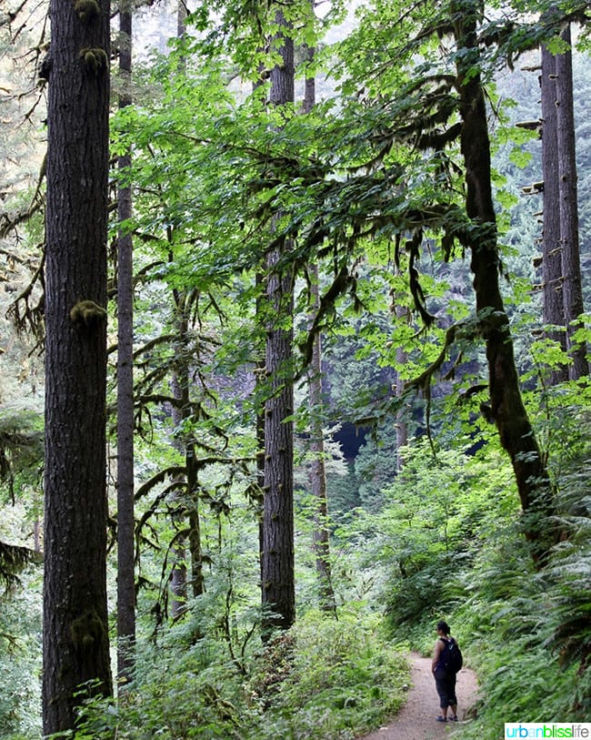Andrea Lee hiking at Silver Falls State Park