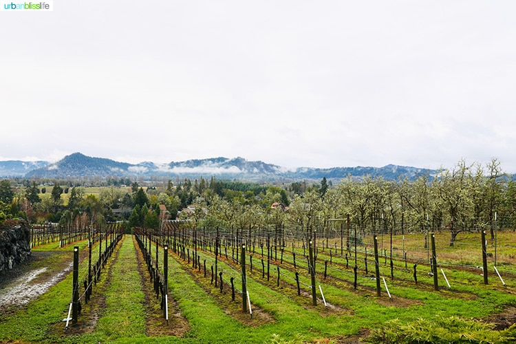 wide shot of Cooper Ridge Vineyard, rows of grapevines