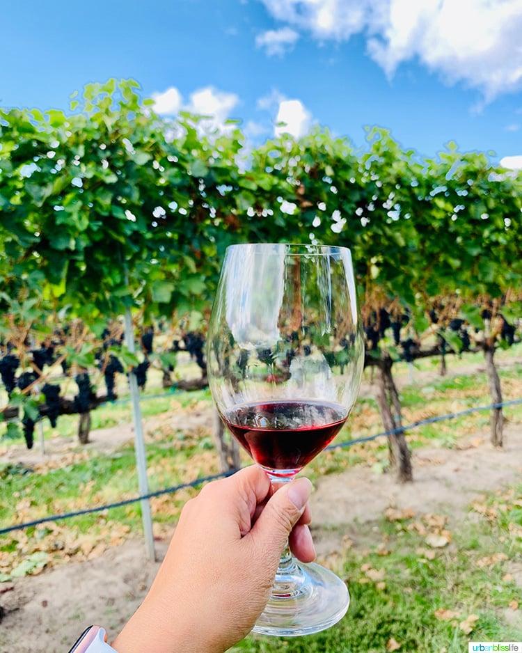 red wine glass walla walla vintner vineyards